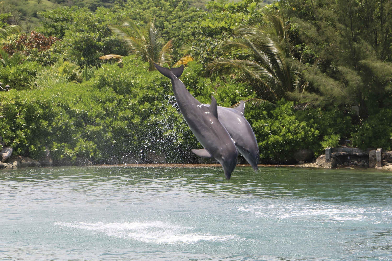 Dolphin Cove Ochos Rios