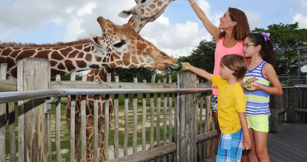 zoo-miami-giraffe-resize-1024x681