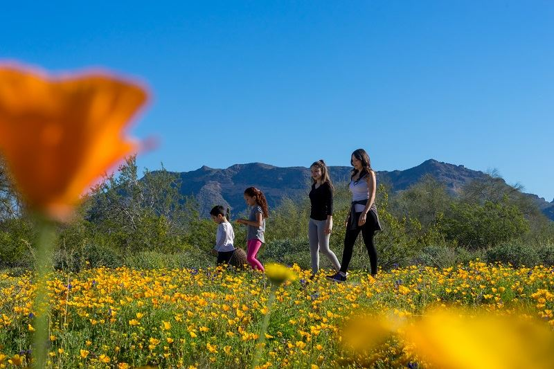 Visit Mesa Hike