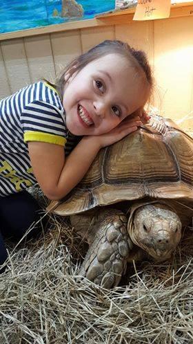 Tortoise hugs