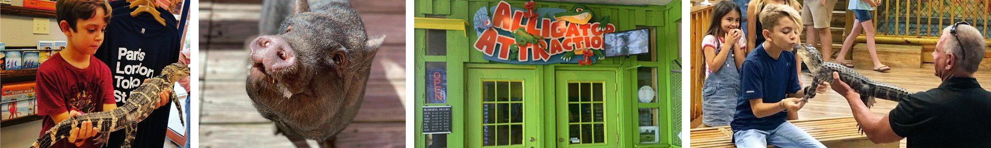 Alligator Attraction Banner