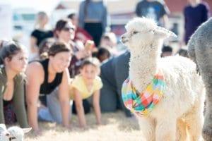 Alpaca AZ Goat Yoga