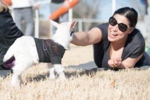 Baby goat AZ Goat Yoga